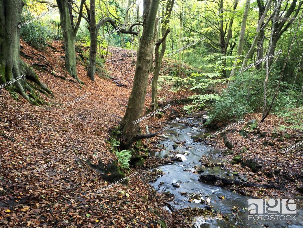 Stock Photo: Birck Beck in Birk Wood in Autumn Harrogate Yorkshire England.