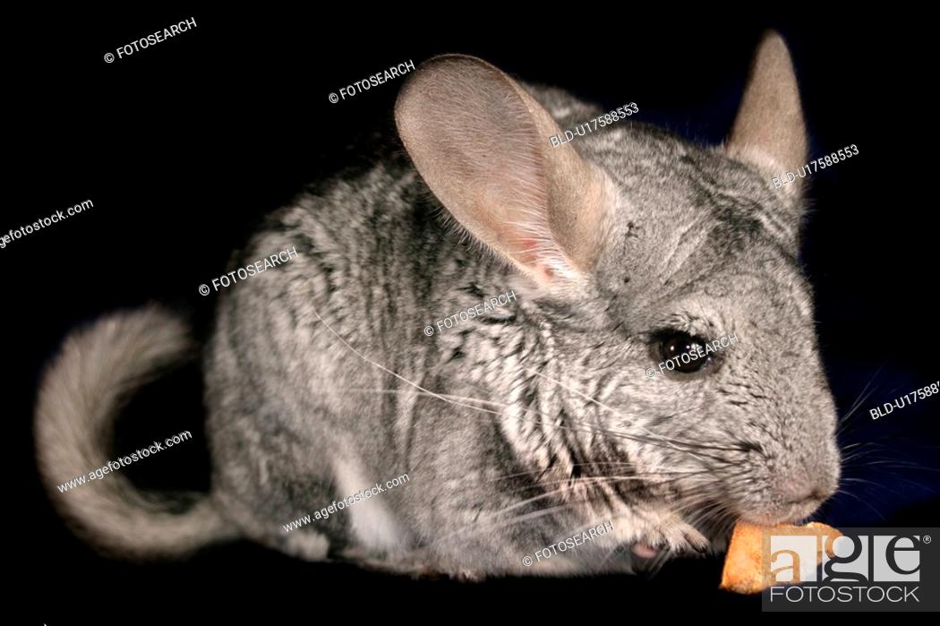 Stock Photo: pet, alfred, animals, black.