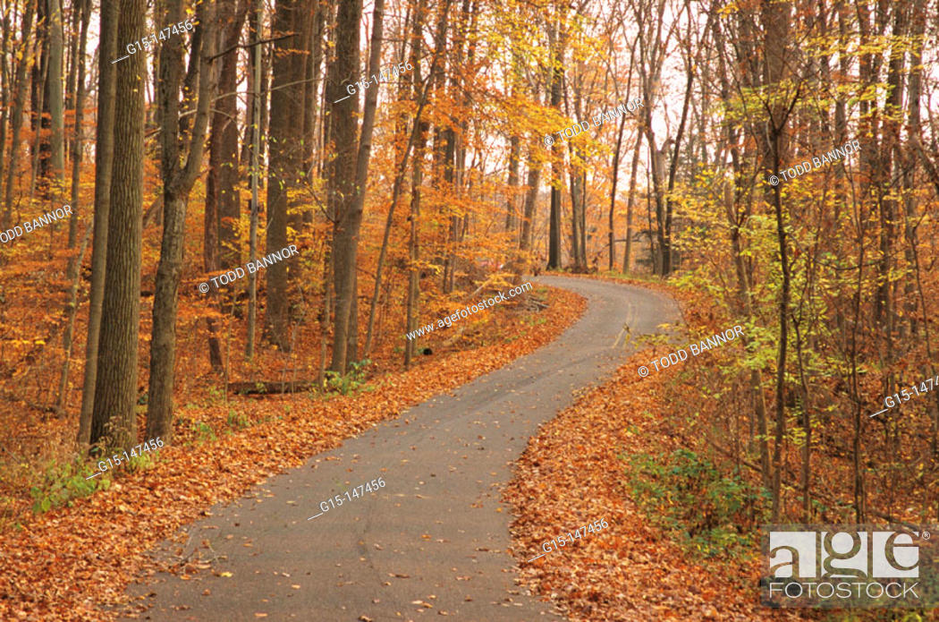 Stock Photo: County road in autumn. Turkey Run State Park. Indiana. USA.