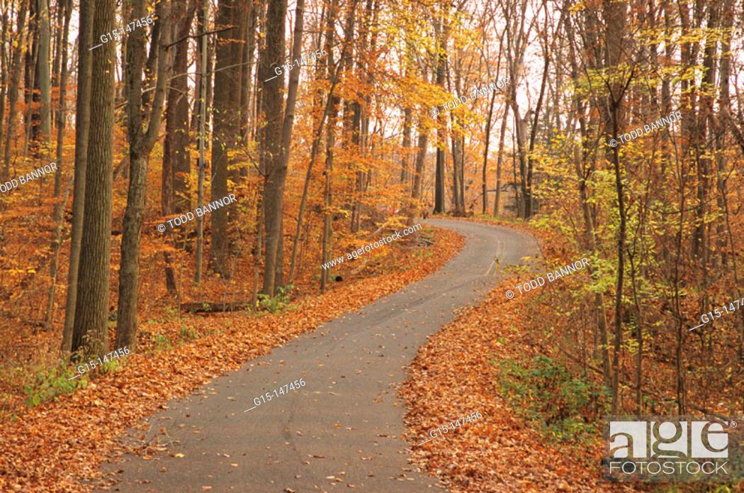 Stock Photo: County road in autumn. Turkey Run State Park. Indiana. USA.