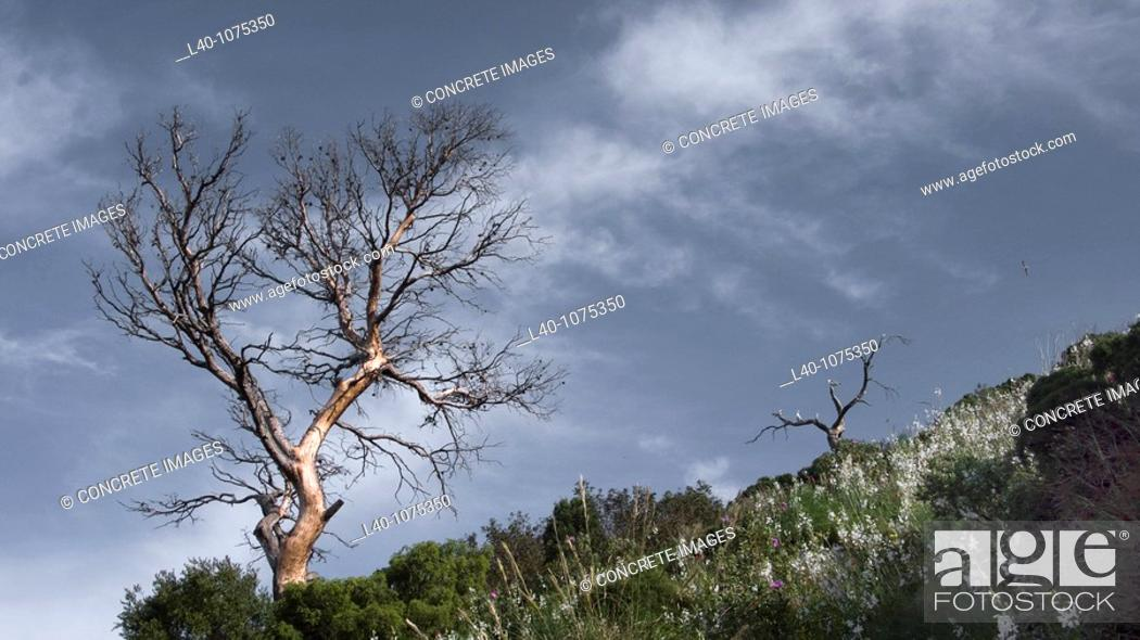 Stock Photo: Peñon de Ifach, Calpe, Alicante province, Comunidad Valenciana, Spain.
