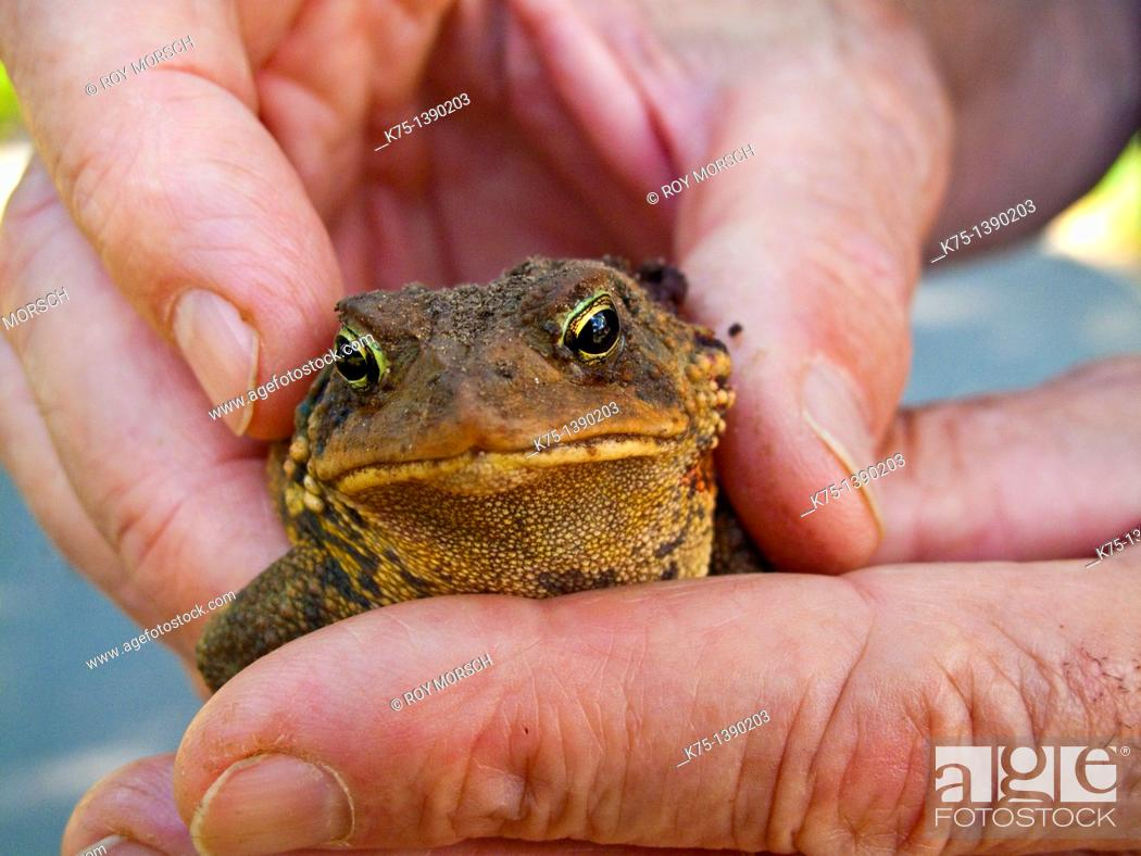 Stock Photo: toad.