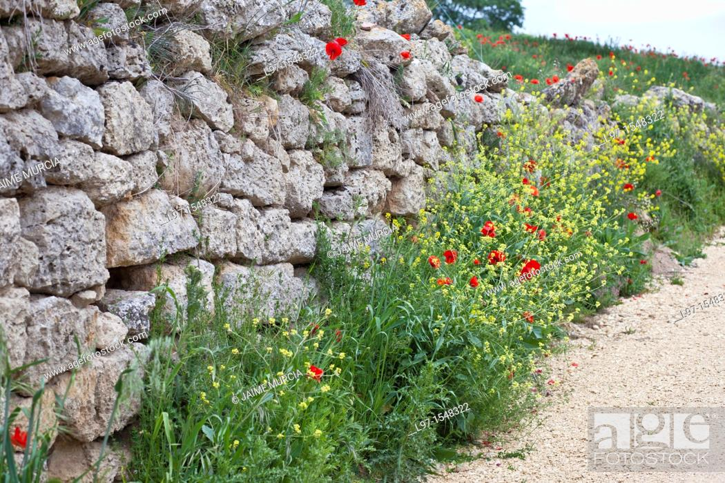 Stock Photo: Stone wall with flowers near the village of Hontanas along the Camino de Santiago, route Frances.