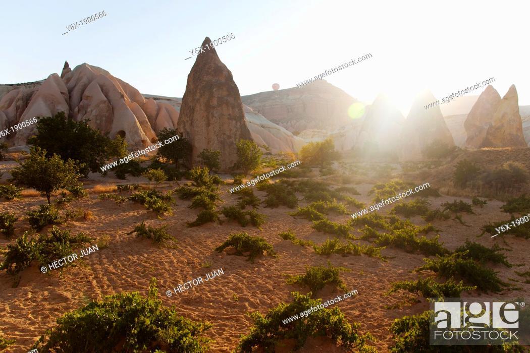 Stock Photo: Vineyards from Cappadocia sunrise.