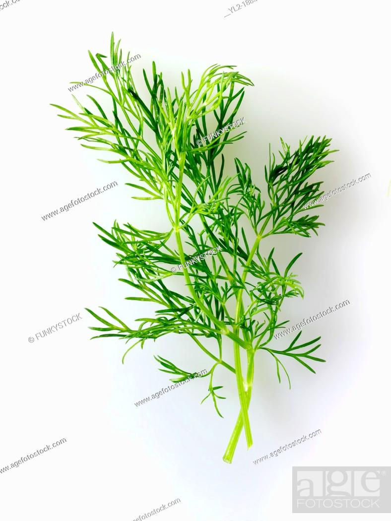 Stock Photo: Fresh Fennel leaves.