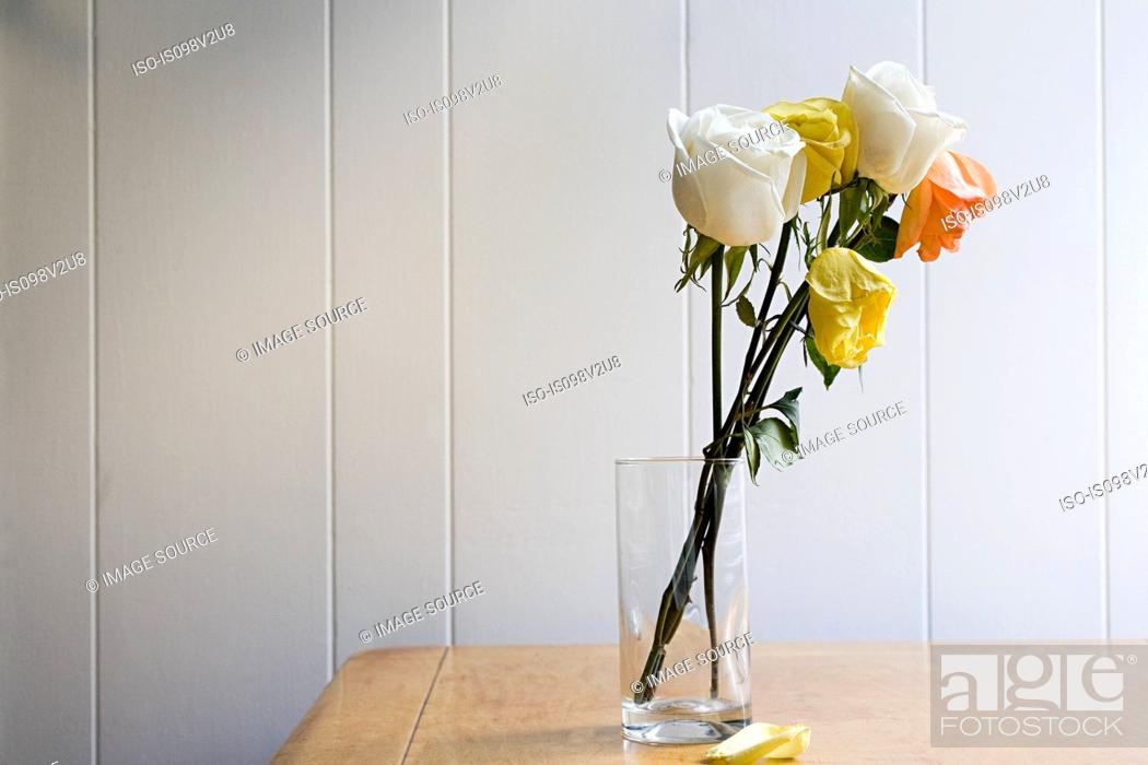 Stock Photo: Dying roses.