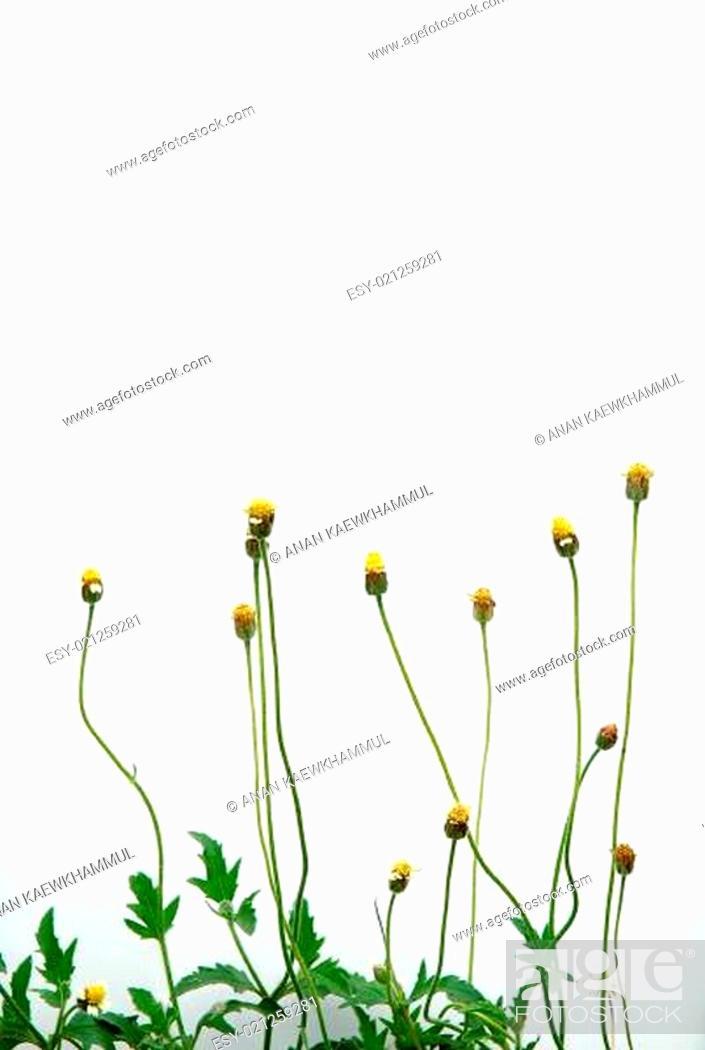 Stock Photo: fresh spring green grass.