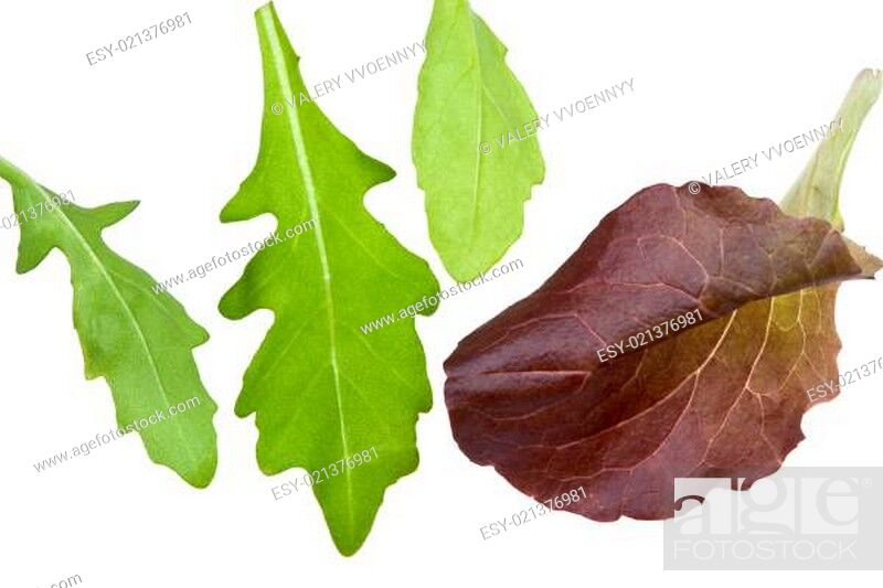 Stock Photo: leafs of salads isolated on white.