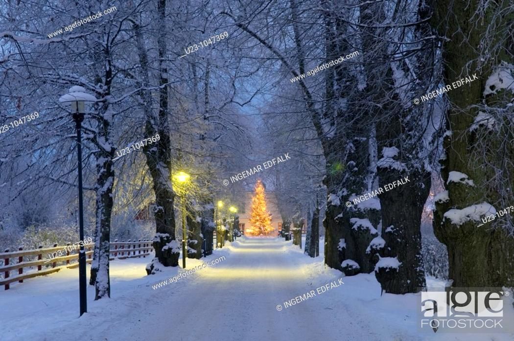 Stock Photo: Lit Chistmas tree in the evening in front of a manor house.