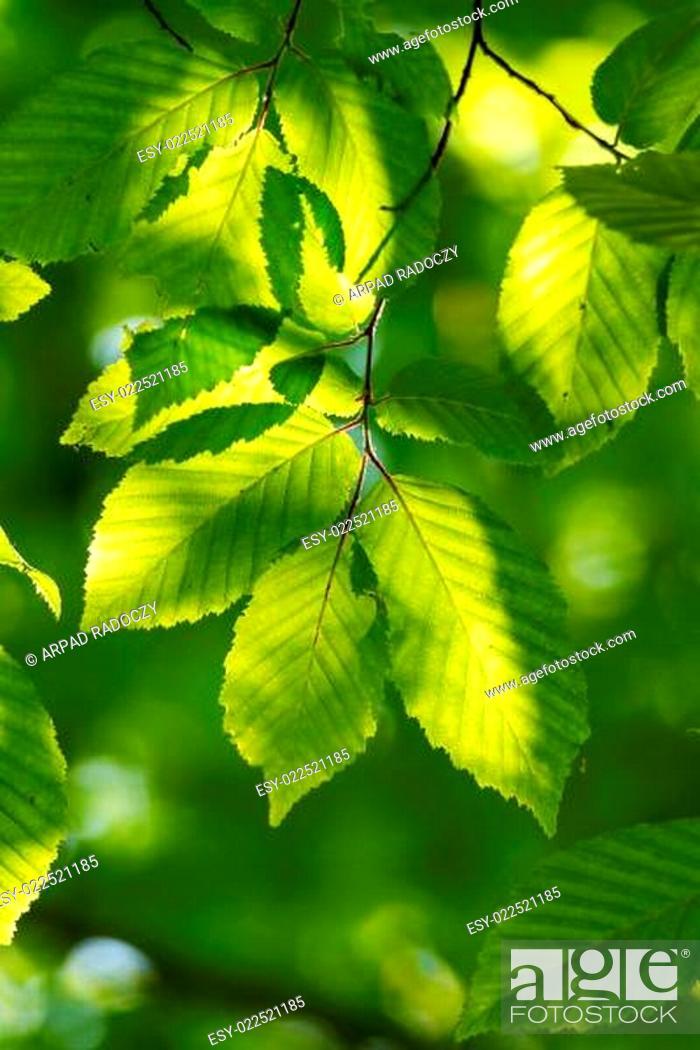 Photo de stock: Leaves.