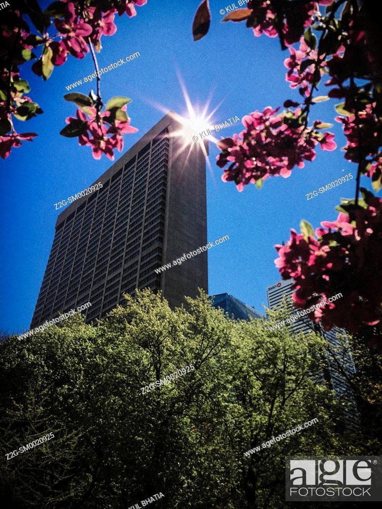 Stock Photo: Early morning sun bounces off a highrise building, as seen through an arch of apple blossoms, Toronto, Ontario, Canada.