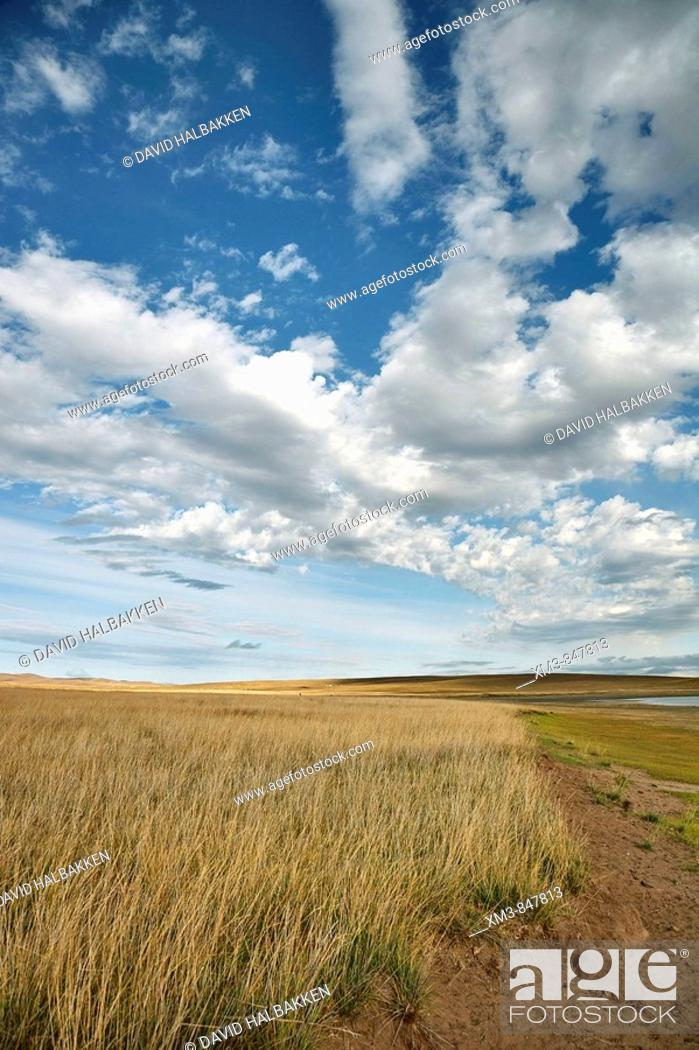 Stock Photo: Grasslands at the shore of Oogi Lake, north central Mongolia.