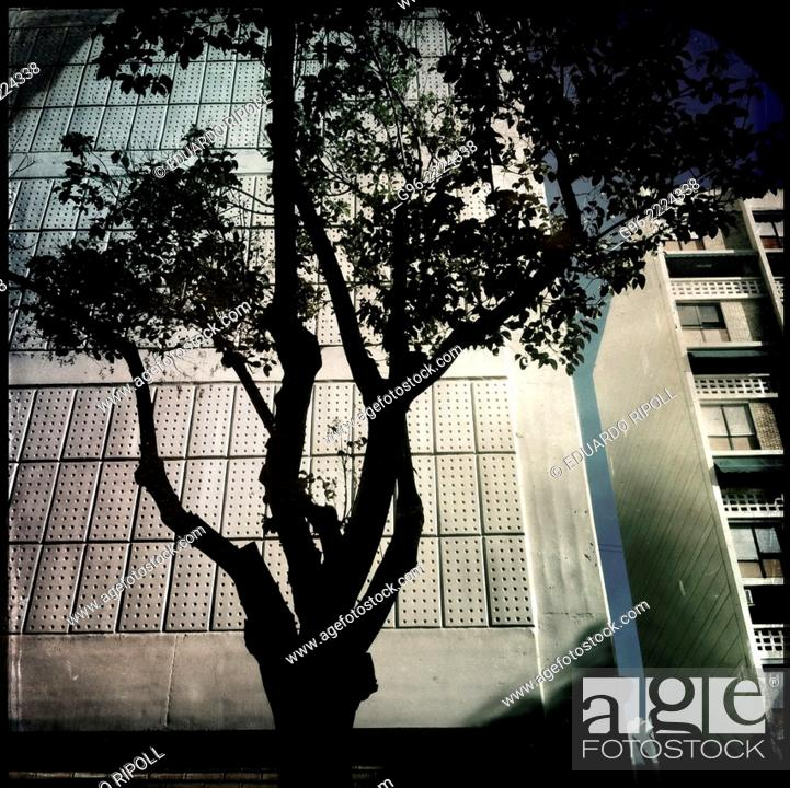 Stock Photo: silhouette of a tree, smart phone shot.