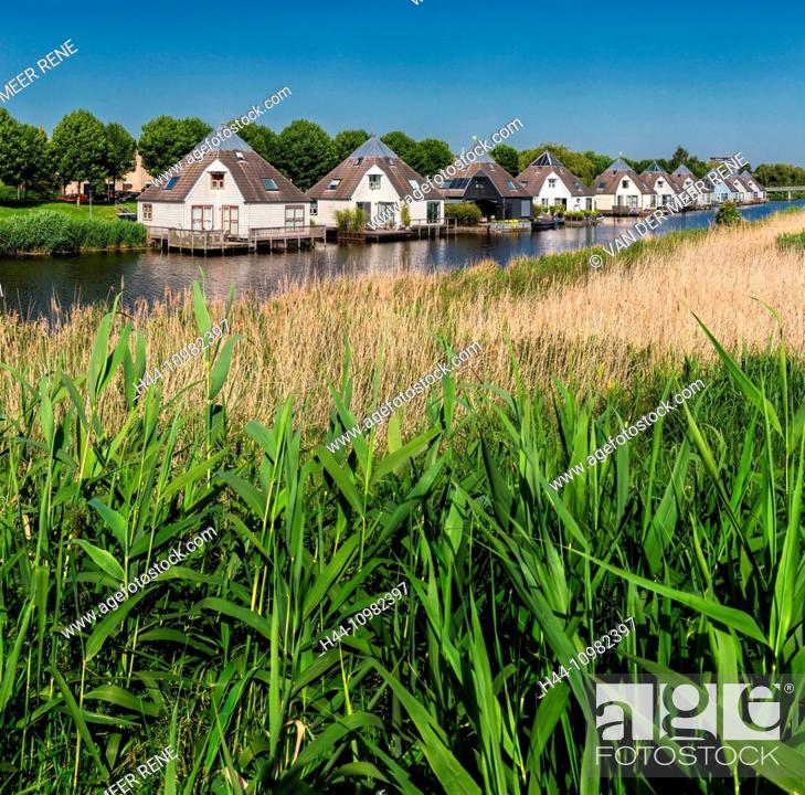 Stock Photo: meadow with cows in Almere, NL.