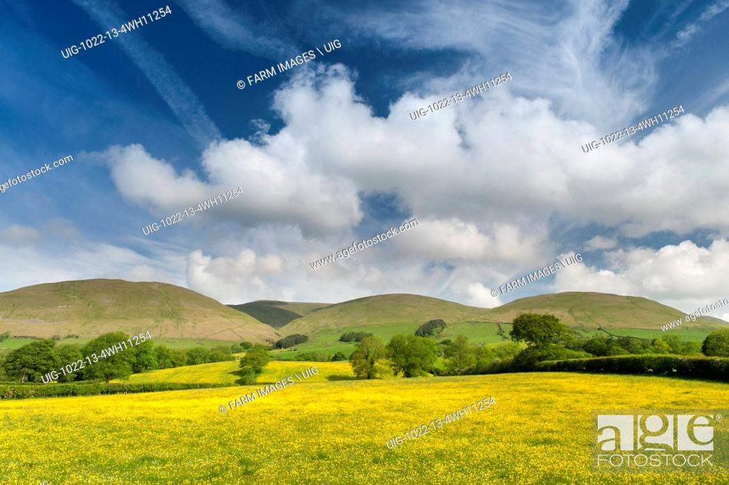 Stock Photo: Wildflower meadow in full bloom near Sedbergh, Cumbria, with the Howgill fells under a dramatic summer sky. UK. (Photo by: Wayne Hutchinson/Farm Images/UIG).