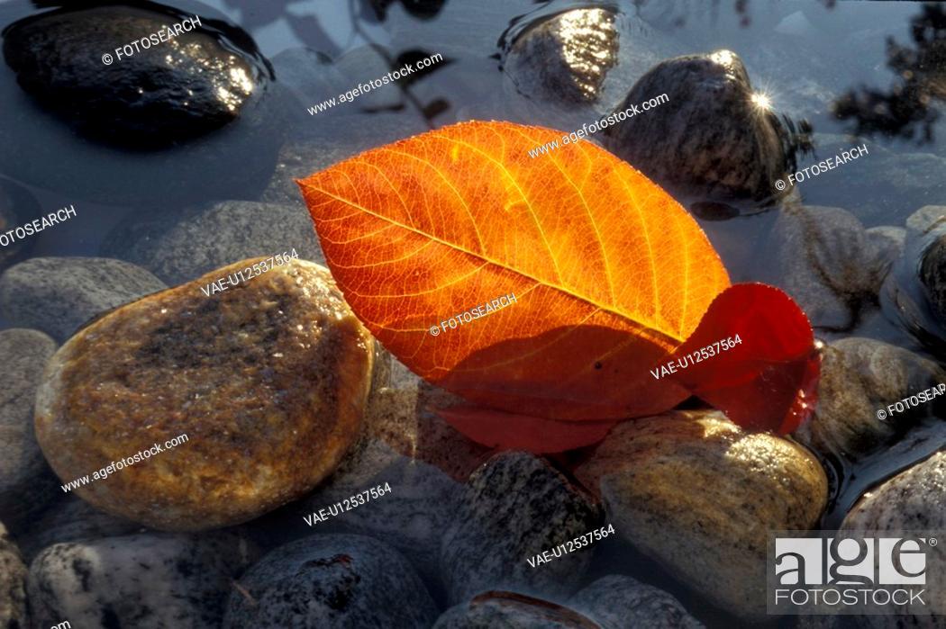 Stock Photo: Bernhard, close-up, CLOSE, brown, autumn.