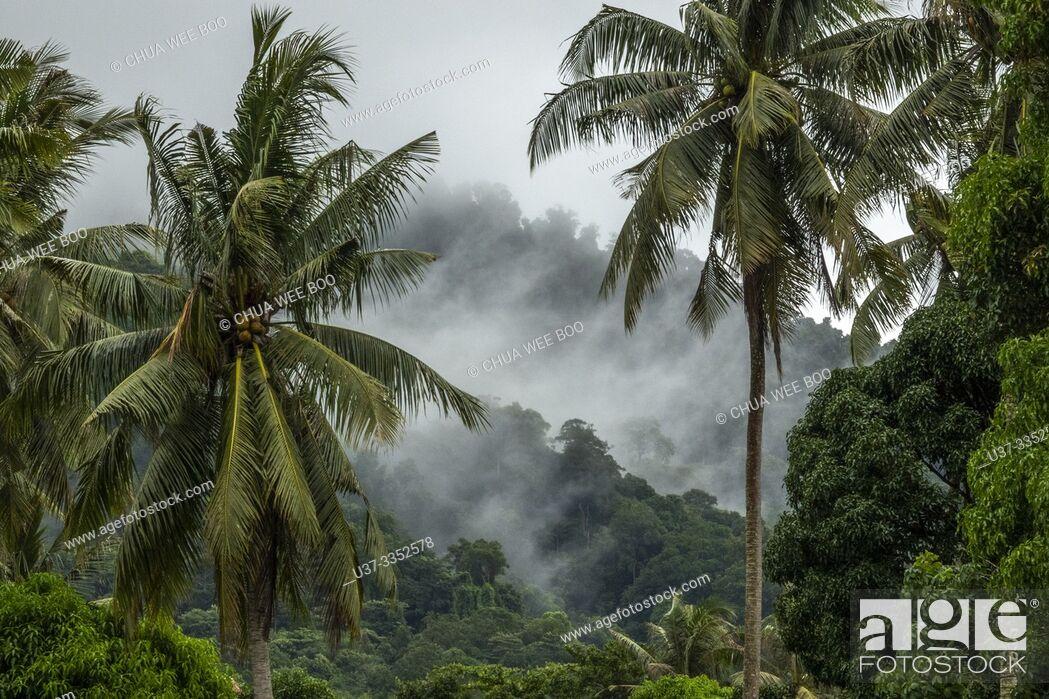Stock Photo: Coconut trees in Telok Melano, Sematan, Sarawak, Malaysia.