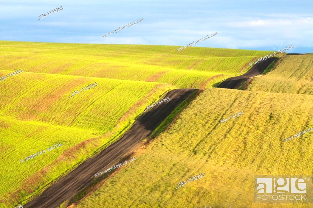 Stock Photo: Fields in the Palouse, a rich farming area in eastern Washington State, USA.