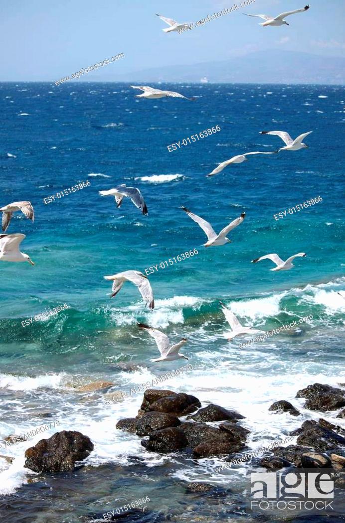 Stock Photo: Seagulls flying.