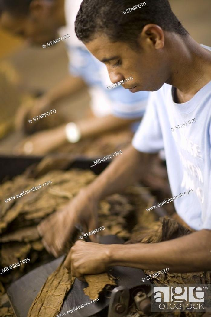 Dominican republic, cigar-factory, workers, tobacco-leaves