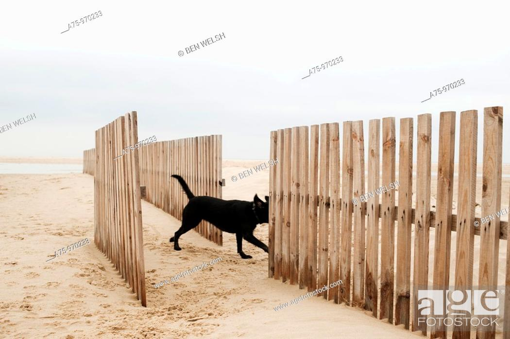 Stock Photo: Dog on the beach, crossing fence.