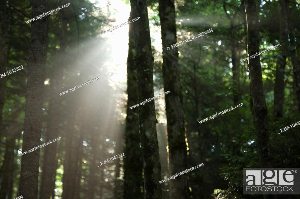Stock Photo: Pemigewasset Wilderness - The sun breaks through the forest along the Wilderness Trail  Located in Lincoln, New Hampshire USA.