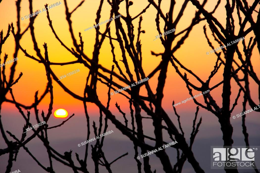 Stock Photo: Sunrise behind a fig tree in a clear spring morning.Photo taken in Pinós, Lleida, Catalonia, Spain, Europe.