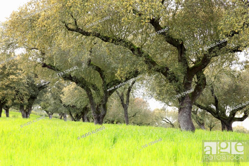 Stock Photo: Typical meadow landscape, Serra de São Mamede, Alentejo, Portugal.