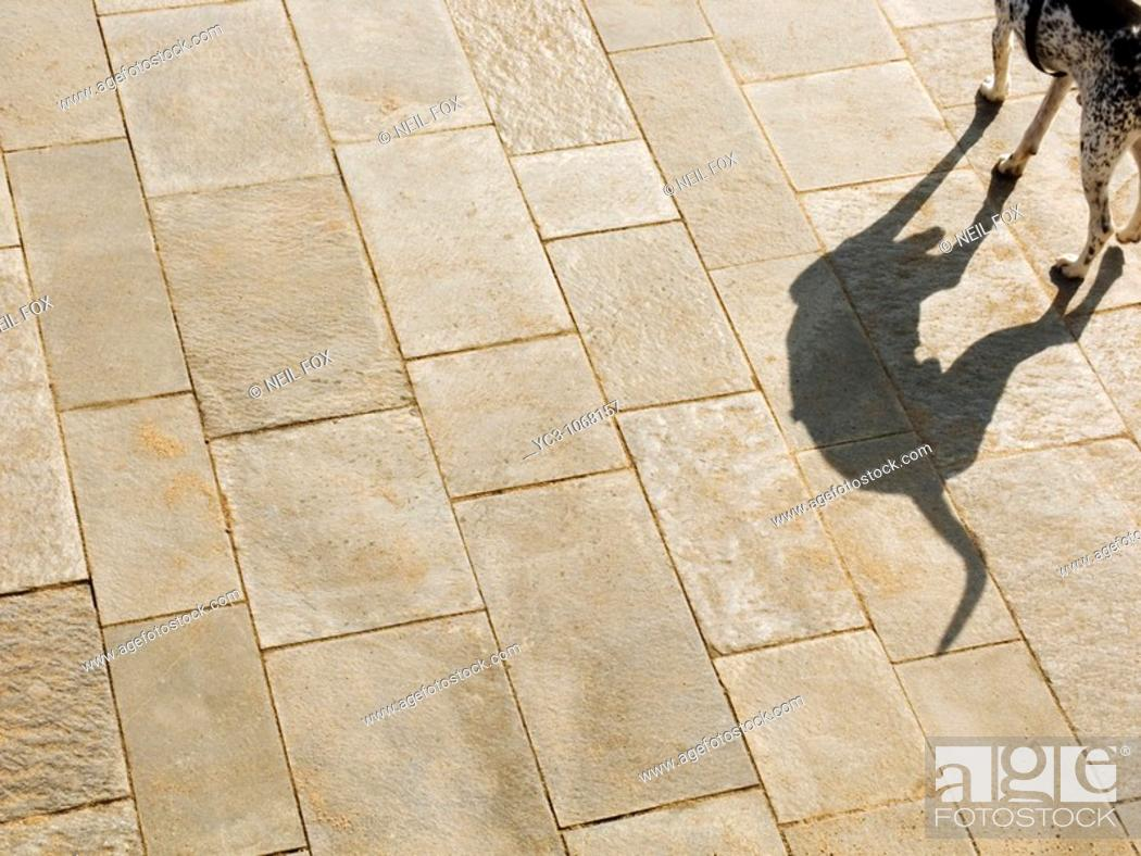 Stock Photo: Dog shadow, Barceloneta, Barcelona, Spain.