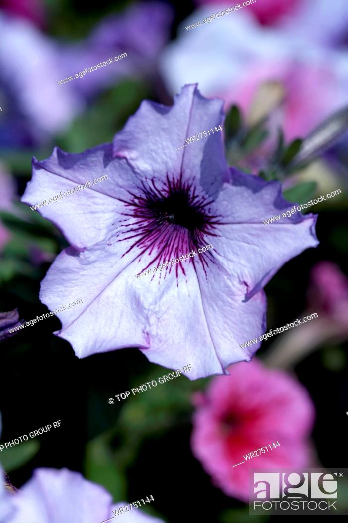 Stock Photo: Flower & Herb.