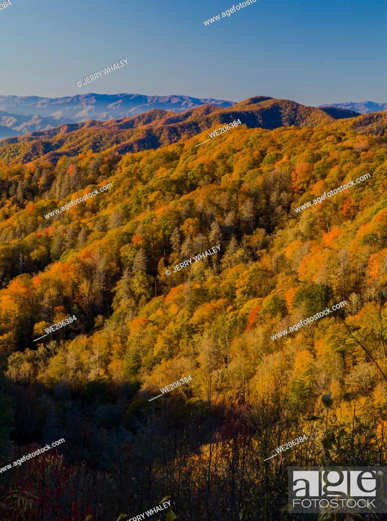 Imagen: Color del otoño en las Grandes Montañas Humeantes.