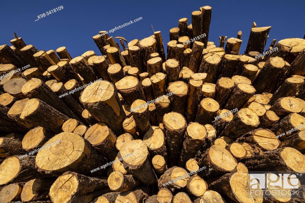 Stock Photo: Lumber industry, Cabrejas del Pinar, Soria, Autonomous Community of Castile-Leon, Spain, Europe.
