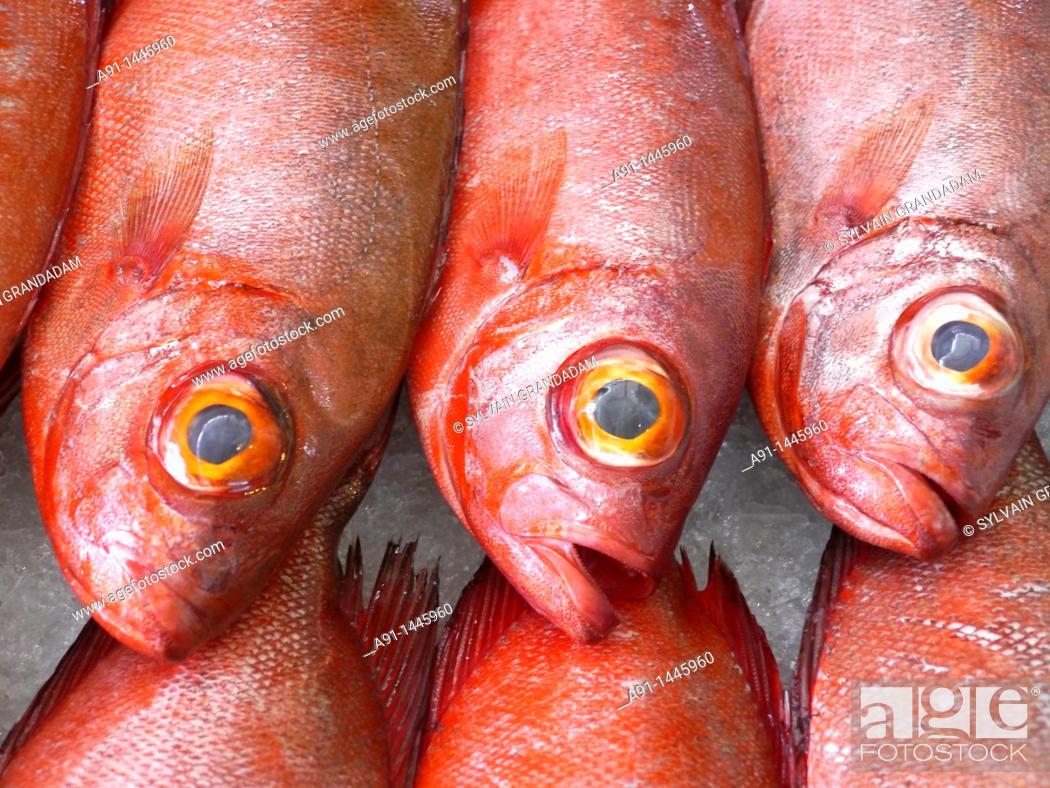 Stock Photo: French Polynesia, leeward islands archipelago, island of Tahiti, Papeete market, fishes stall.