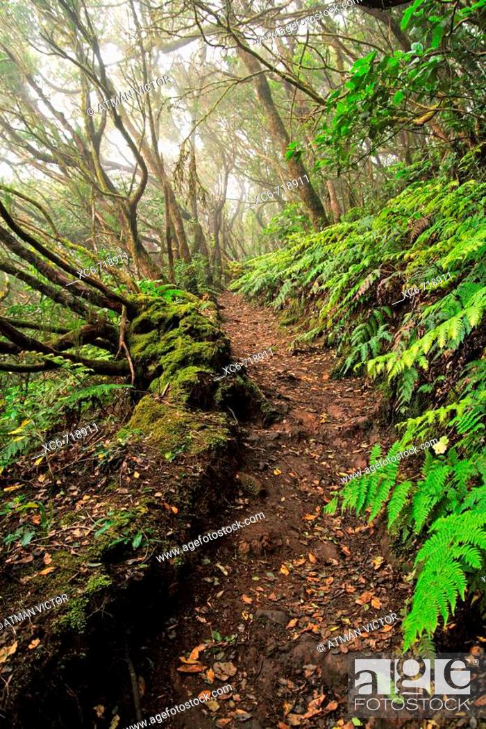 Stock Photo: Forest, Anaga mountains, Tenerife. Canary Islands, Spain.
