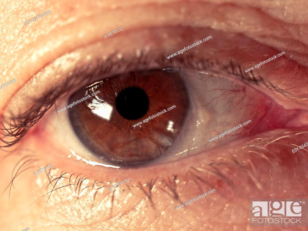 Stock Photo: Human brown eye of adult woman.