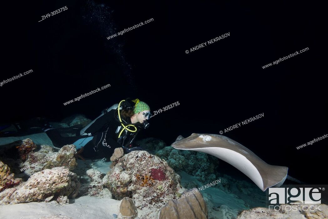 Stock Photo: Female scuba diver looks at stingray in the night. Pink whipray or Banana-tail ray (Himantura fai).