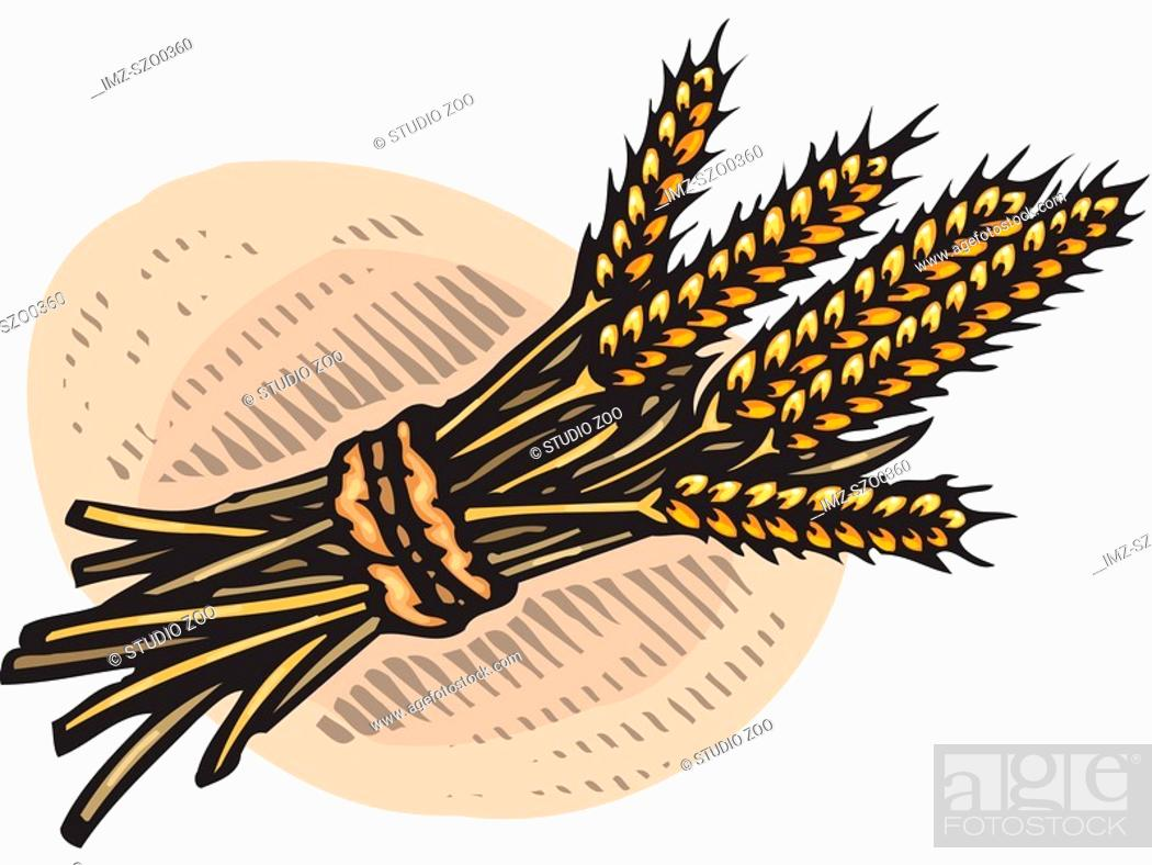 Stock Photo: An illustration of a bundle of wheat.