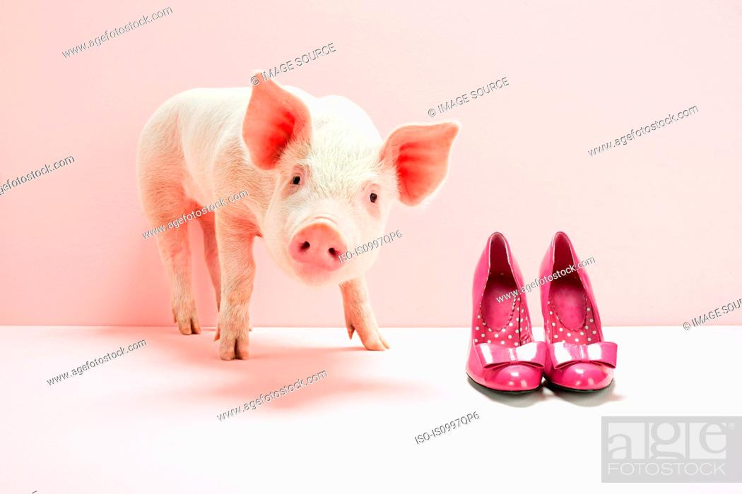 Stock Photo: Piglet next to shoes in pink studio.