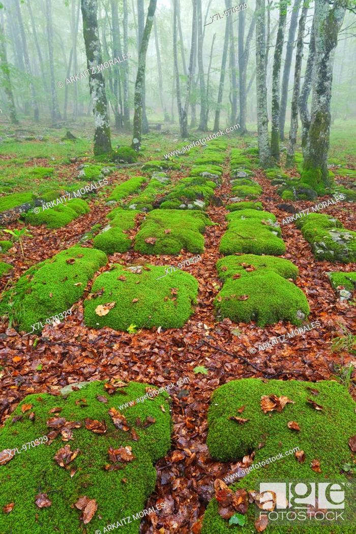 Stock Photo: Grid, natural pattern. Bosque Santiago Natural Park, Province of Burgos, Spain.