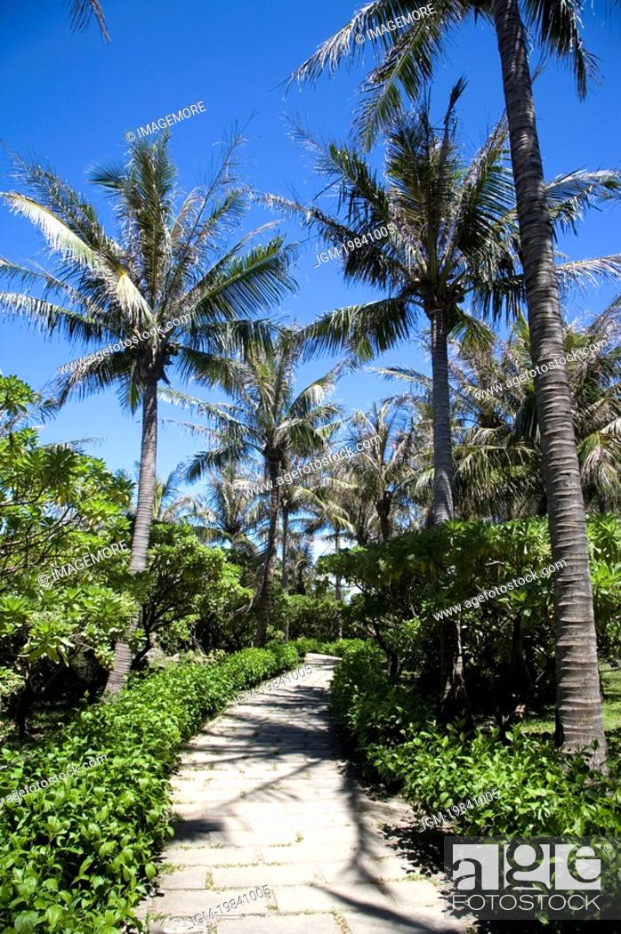 Stock Photo: A pathway with coconut palm trees and bushes.