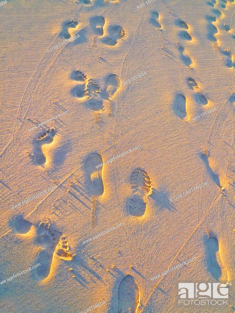 Stock Photo: Footprints on the sand, Waikiki Beach, Hawaii, USA.