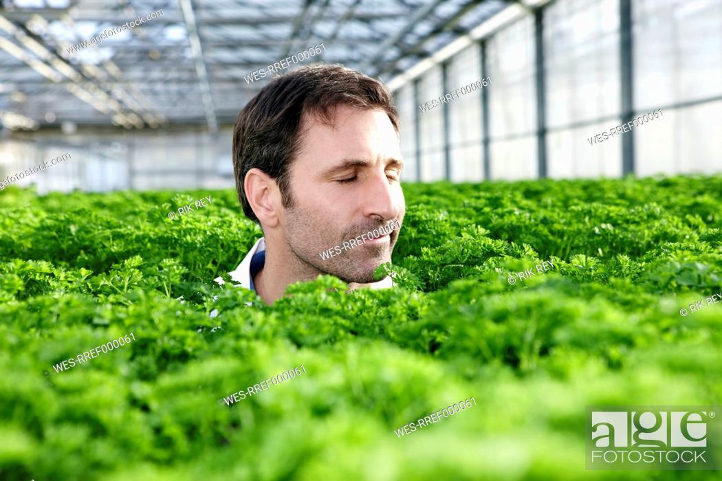 Stock Photo: Germany, Bavaria, Munich, Mature man in greenhouse between parsley plants.