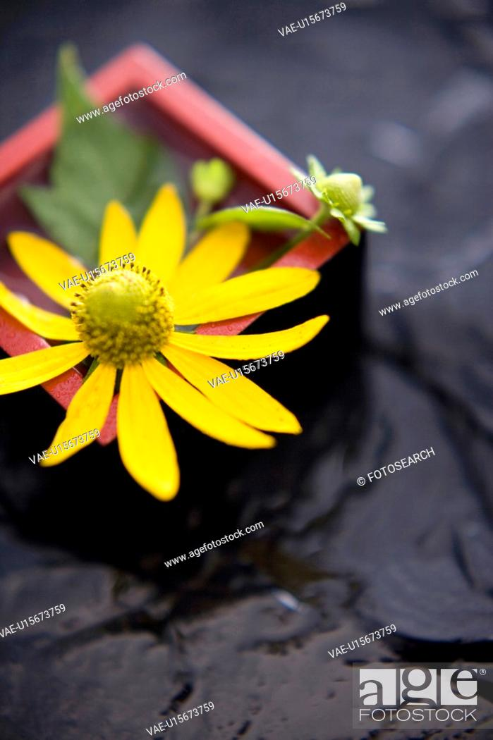 Stock Photo: Helianthus tuberosus.