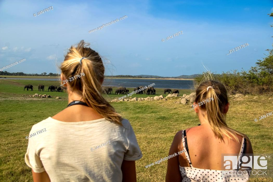 Stock Photo: Tourists taking pictures from elephants in minneriya national park, sri lanka.