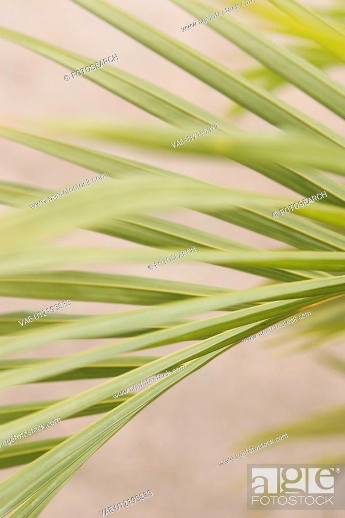 Stock Photo: bushes.