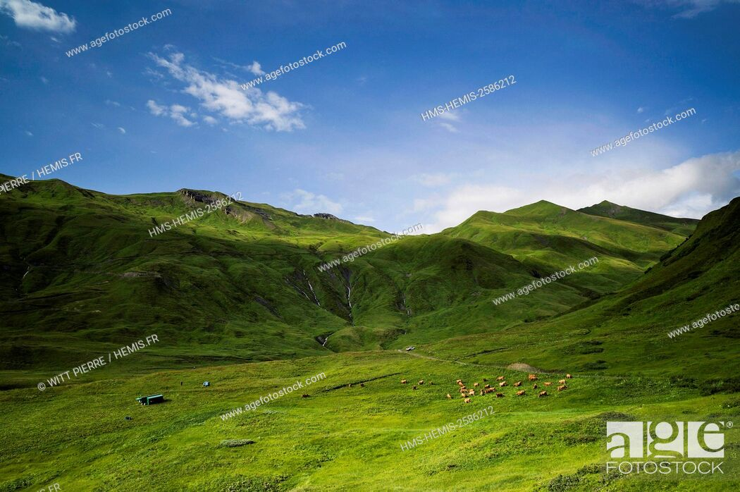 Stock Photo: France, Savoie, Beaufortain valley, Beaufort sur Doron, mountain pastures of the Cormet de Roselend pass.