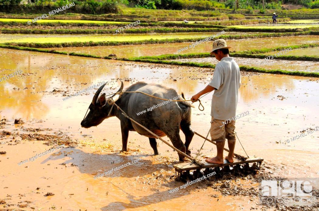 Stock Photo: Vietnam, Quang Nam, the work of preparing rice paddies.