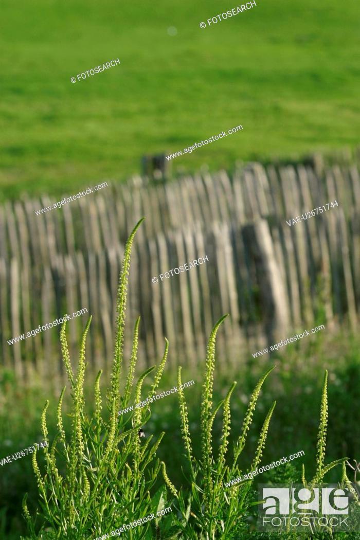 Stock Photo: vegetation, wild, yield, fleshy, organic, foliage.