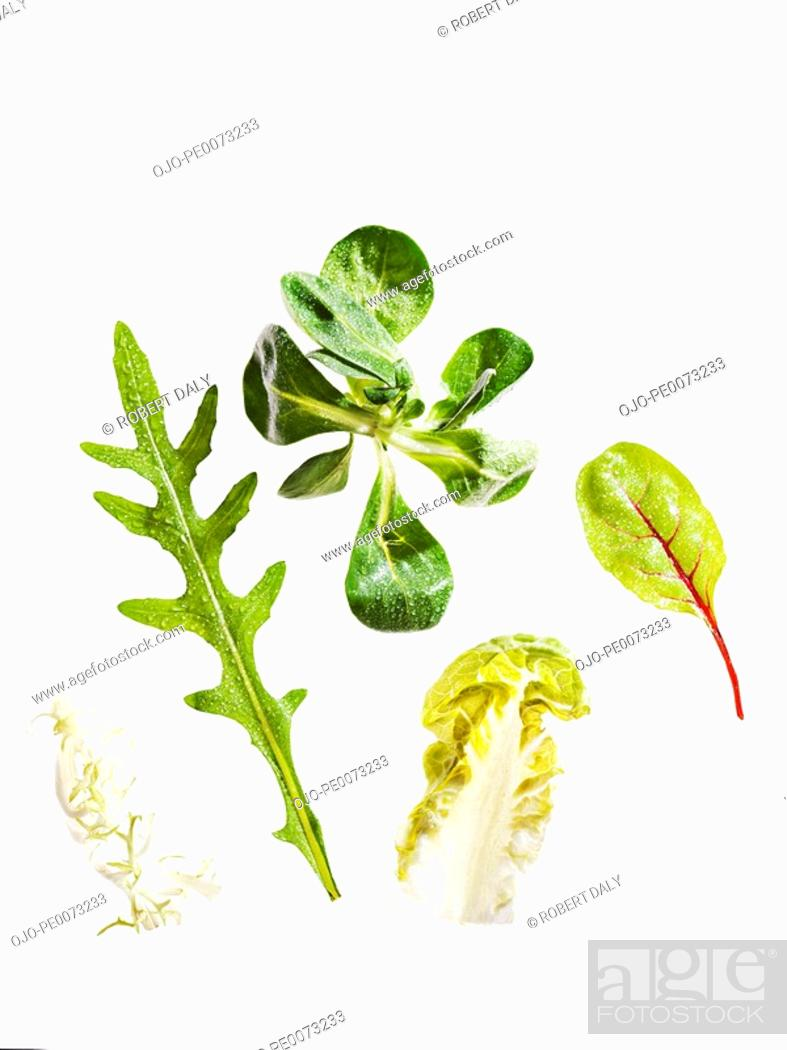 Stock Photo: Variety of green leaf lettuce.