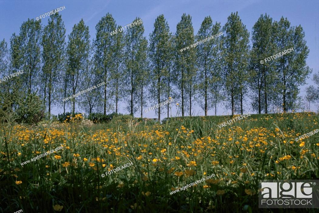 Stock Photo: A Yellow Flower Field And Trees In France.
